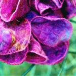 Petite Fleur - Millinery - Saraden Designs